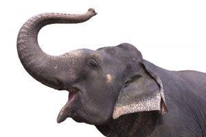 slurf-olifant